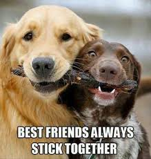 Cute Friend Memes - best friends always stick together picture quotes