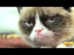 No Meme Grumpy Cat - 69 best grumpy cat and lil bub video images on pinterest grumpy