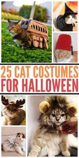 25 halloween costumes cats ideas cat