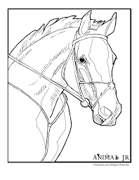 realistic horse coloring pages coloring