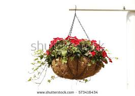 Hanging Flowers Hanging Flowers Stock Images Royalty Free Images U0026 Vectors