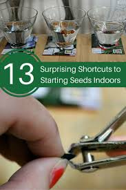 the 25 best starting seeds indoors ideas on pinterest seed