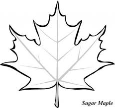 10 pics of leaf outline coloring page apple leaf template maple