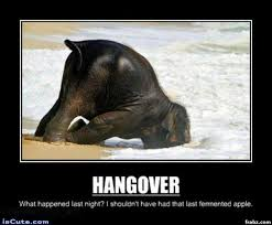 Hangover Meme - elephant hangover meme generator captionator caption generator frabz