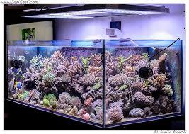 led reef aquarium lighting 403 best orphek aquarium led lighting images on pinterest