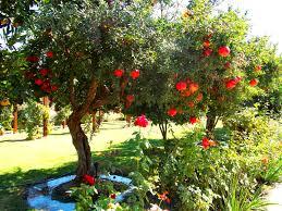tree of life tree of life