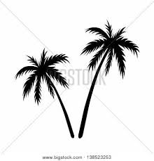 two palms sketch black coconut vector u0026 photo bigstock