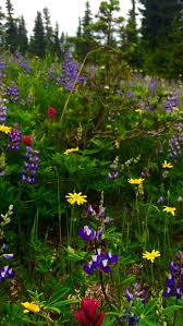 best native plants 18 best native plants and wild flowers of mt rainier and the pnw