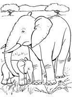 Coloriage Eléphant sur Top Coloriages  Coloriages elephant
