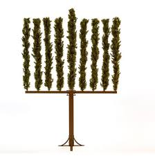 this is real menorah tree jstyle