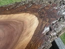 finished live edge black walnut juglans nigra wood slab live