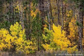 fall colors eastern sierras mono lake night