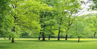 albero giardino alberi quali mettere iin giardino ed i loro benefici