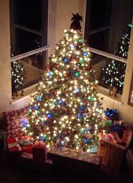 where to find the perfect christmas tree in fort lauderdale florida