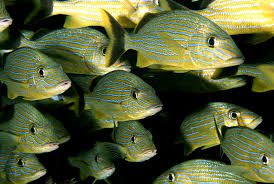 climate change may shrink the world u0027s fish