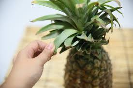 pineapple how to cut a pineapple 11 steps with pictures wikihow