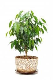 14 best top houseplants for improving indoor air quality images on