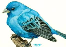 How To Attract Indigo Buntings To Your Backyard Indigo Bunting Watercolor Art Print Of Bird Painting Saylor Wolf