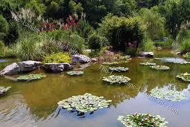 Backyard Pond Landscaping Ideas Big Pond Planting Ideas