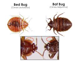 Dont Let The Bed Bugs Bite Don U0027t Let The Bed Bugs Bite U2013 Cobbtf