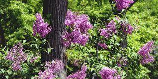 botanic garden field science center for northern biosphere