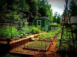 27 best allotment ideas images on pinterest vegetable garden