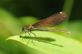 small dragonfly 4288 x 2848 macro photography miriadna com