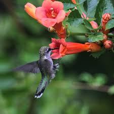 native plant solutions plants for birds plant it and they will come ecological