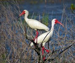 10 elegant and graceful white birds
