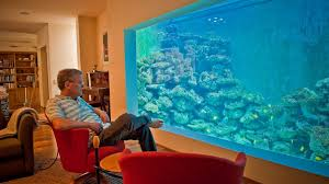 home aquarium the israeli who swims in his living room israel21c