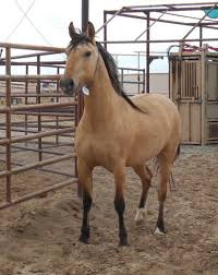 mustang rescue stick best 25 adoption ideas on s baby