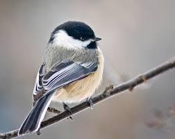 how to attract birds to your home garden or bird feeder jill