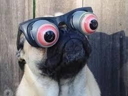 Funny Pug Memes - 15 hilarious pug memes playbuzz