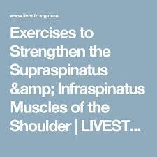 Innervation Of Supraspinatus 25 Best Infraspinatus Muscle Ideas On Pinterest Supraspinatus