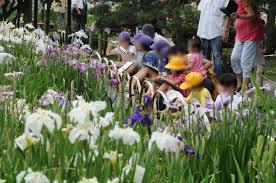 Family Garden Trains See Seasonal Flowers At Tōkyō U0027s Horikiri Shōbuen Iris Garden