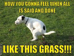 Grass Memes - memgenerator pl mem generator