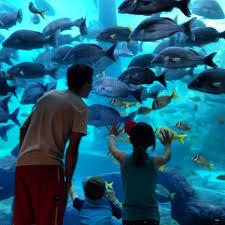 Comfort Suites Atlantis Day Pass Comfort Suites Paradise Island Review And Photos Visitparadise