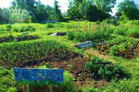 vegetable garden plans raised beds thematic vegetable garden