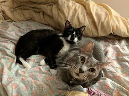 thanksgiving cat gif cats