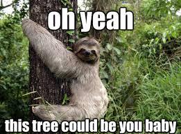 Dirty Sloth Memes - funny dirty sloth memes