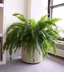 Beautiful Indoor Plants 76 Best Indoor Plants Images On Pinterest Plants Potted Plants