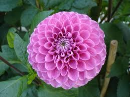 flower love pink forever fresh perfect green sunshine bright