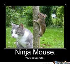 Ninja Meme - ninja mouse by symanovitch meme center