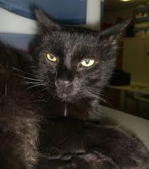 cat names archives mythreecats com catblog