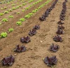108 best garden soil can be dirty images on pinterest garden