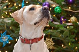 how to puppy proof your tree nation