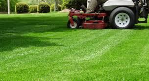 concimazione tappeto erboso irrigare e concimare il prato in estate giardinaggio piante e fiori