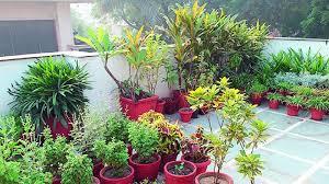 terrace gardening visakhapatnam terrace garden idea withers away