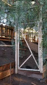 metal frame aviary backyard chickens