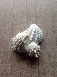 where to buy seashells sea shells for sale buy seashells spiny shell shell crafts